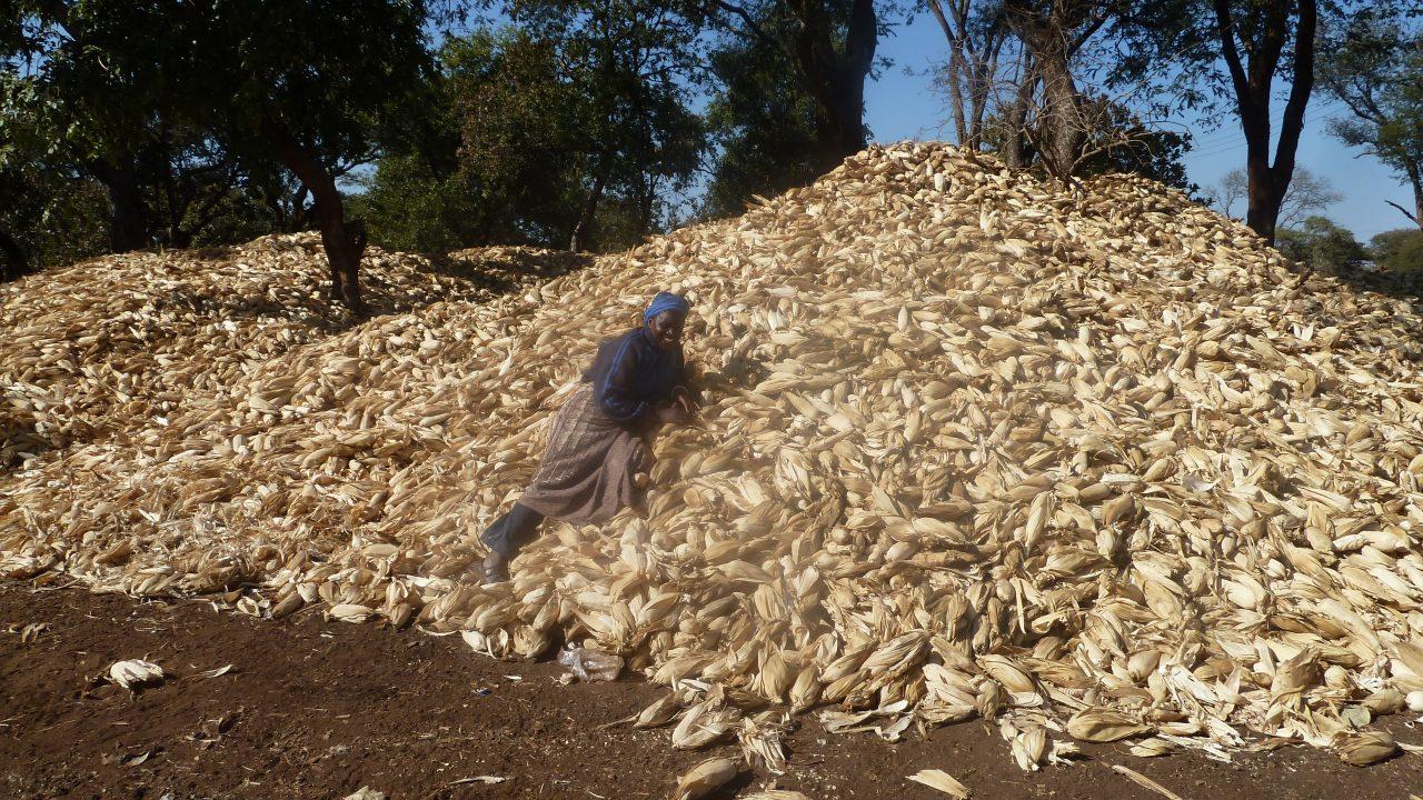 Wamunyima and maize