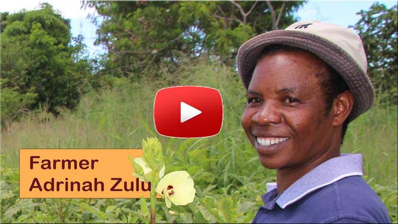 Farmer, Adrinah Zulu