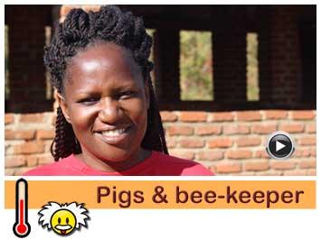 054 Pigs and bee-keeper Bridget