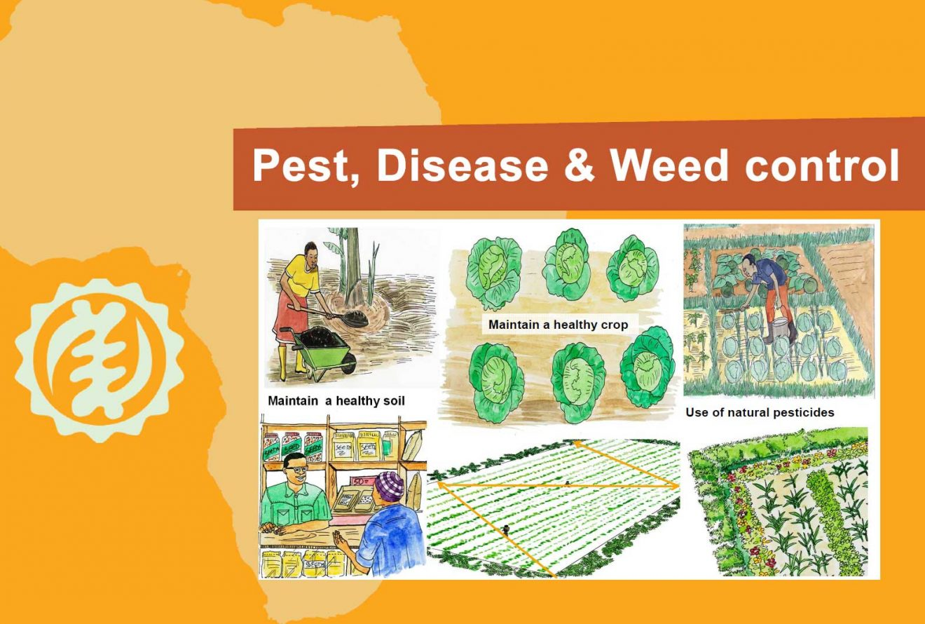 4-cover_Pest_disease_and_weed_control