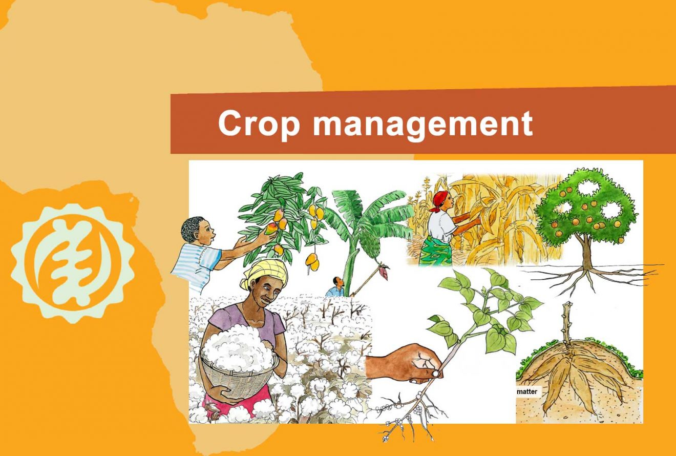 9-cover_Crop_management